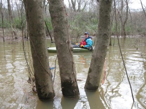 """CRBI Member Robin Harrison paddles the Burwell Creek floodplain. In the foreground is pink surveyors tape designating the area as """"wetlands""""...good call!"""