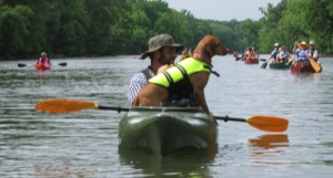 The Etowah is open to all paddlers, including the four-legged variety.