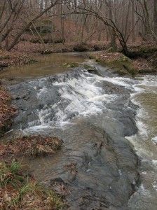 Free-flowing streams like Ward Creek in Bartow County provide habitat for the Cherokee darter.