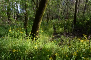 Spring in the Burwell Creek property. A proposed 60-acre retail center would bury this floodplain forest along the Oostanaula River in Rome.