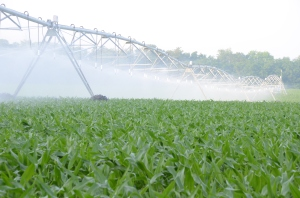 A center-pivot irrigation system rolls across corn along the Flint River in Southwest Georgia.