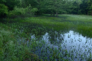 A new federal rule clarifies which wetlands, streams, rivers, ponds and other water bodies are protected under the Clean Water Act.